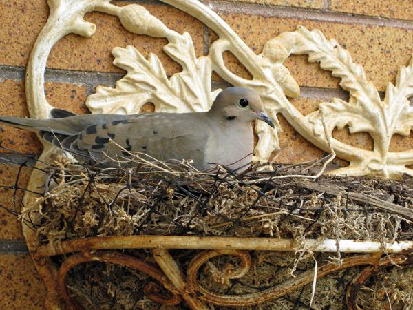 Bird outside door lower res