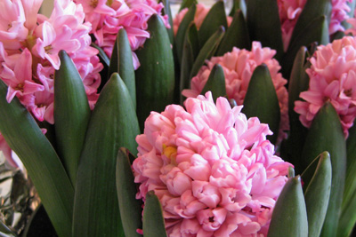Easter flower lower res