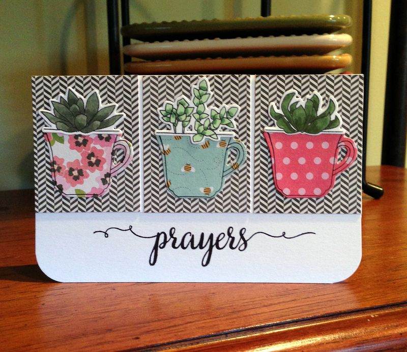 Three succulents card