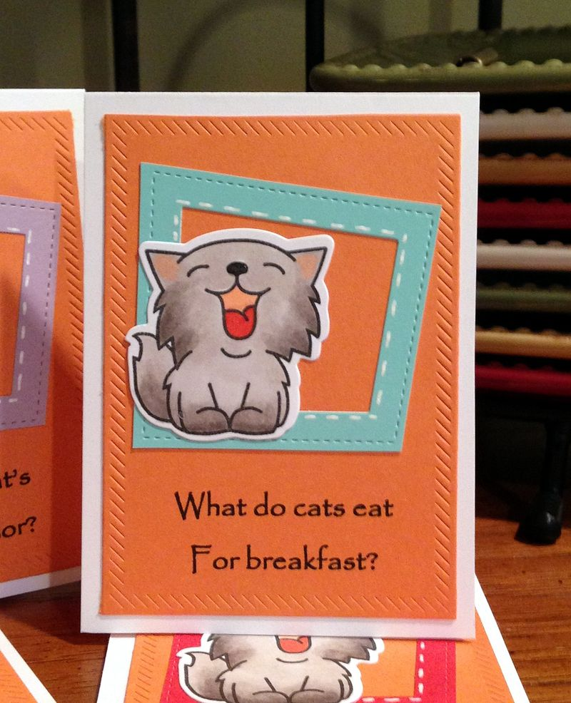 Cat jokes cards close up