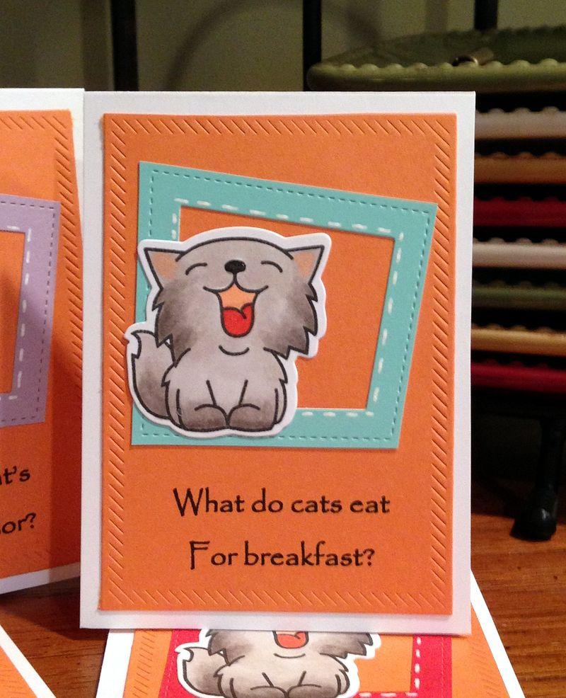 Cat jokes cards close up